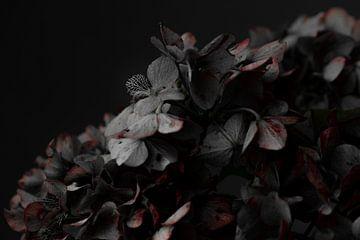 Hortensien-Alterung von Sabine Keijzer