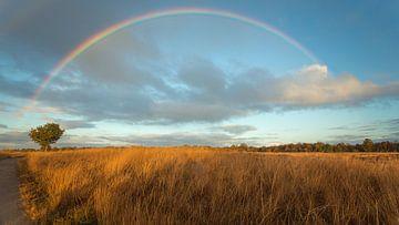 Regenboog boven Nederland van