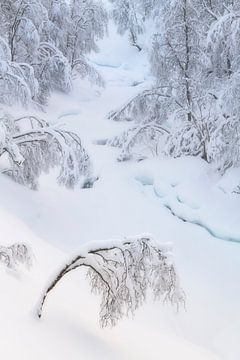 Bomen onder een laag met sneeuw op Senja in Noorwegen van Jos Pannekoek