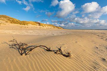 Les côtes dans le sable