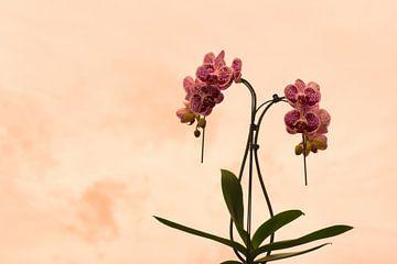 Orhidee pantermotief van J..M de Jong-Jansen