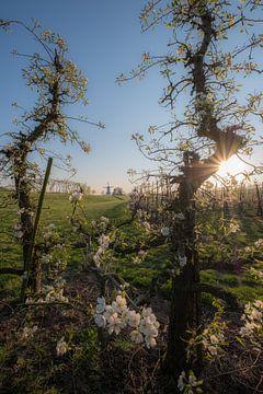 Blühende Obstbäume und Mill the Butterfly von Moetwil en van Dijk - Fotografie