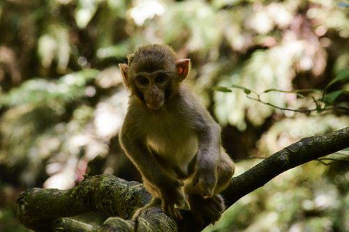 Jonge makaak  in het Chinese bos van