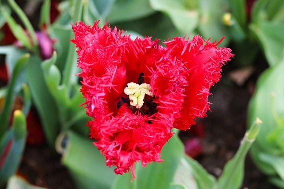 Een roze bloem die mooi in bloei staat