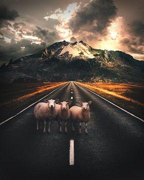 Schafe auf der Straße in Island von Composities van Roman