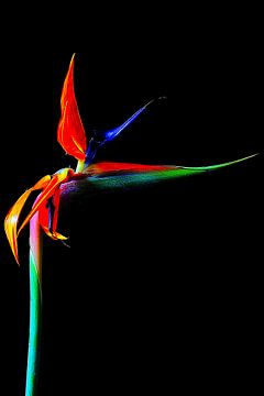 Blume. von Yvonne Stroomberg