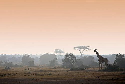 GOEDEMORGEN KENIA van