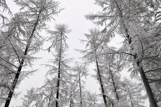 Besneeuwde bomen van Sjoerd van der Wal