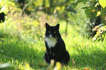 Kat in het park. von