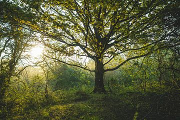 Baum im Frühling von Merel Tuk