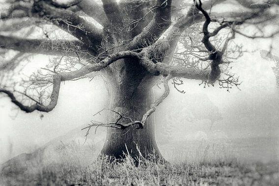 Baum im Nebel auf einer Wiese