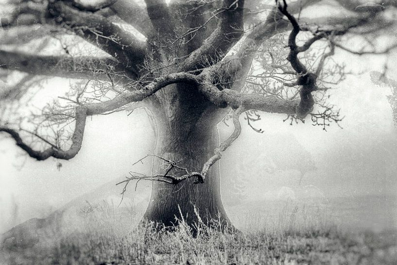 Baum im Nebel auf einer Wiese van Frank Grässel