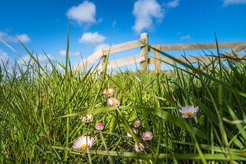 Foto genomen vanuit het gras met hek op de achtergrond van Natascha Teubl