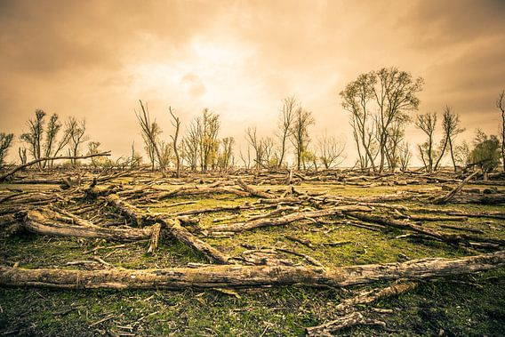 Het magische aangezicht van een stervend bos