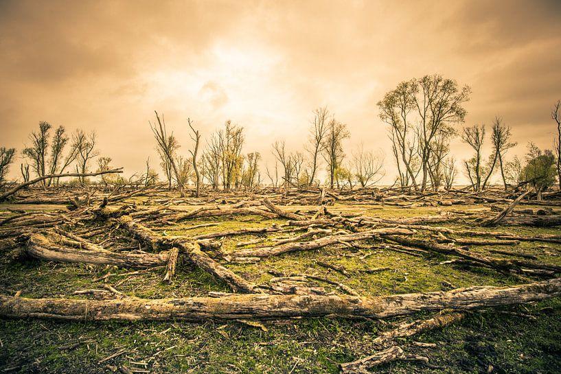 Het magische aangezicht van een stervend bos van Thomas Boelaars