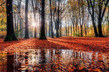Herfst reflectie in het bos von Dennis van de Water