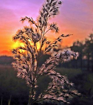 Zonsondergang, maar dan anders.... van Luc van Alphen