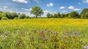 Zomers landschap met wilde bloemen 2 van