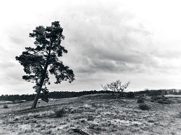 Landschaft in Schwarz und Weiß mit einem einsamen Baum von Giovanni de Deugd