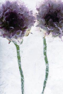 Grasnelke in Eis 2 von Marc Heiligenstein