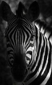 Afrikaanse barcode van Joris Pannemans - Loris Photography