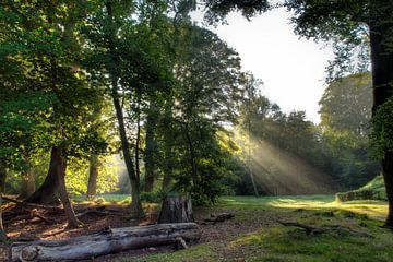 Sprookjesachtig bos van Zilte C fotografie