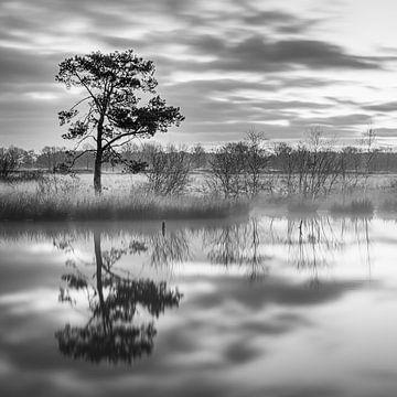 Nationaal Park Dwingelderveld in Zwart-Wit van Henk Meijer Photography