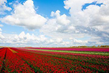 Tulpen in Flevoland van Jurgen Corts
