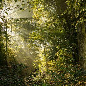 Lichtstrahlen von Severin Frank Fotografie