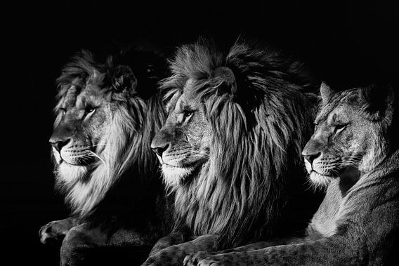 Leeuw van Ron van Zoomeren