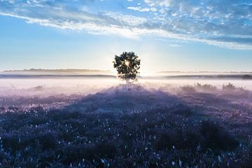 Prachtige zonsopkomst op de Gooische heide! van gooifotograaf