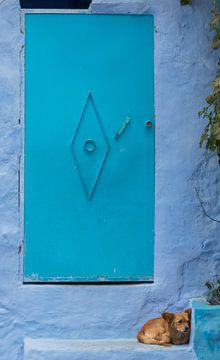 Hondje in Chefchaouen (Marokko) van Marcel Kerdijk