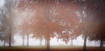 Fog and trees van Arjen Dijk