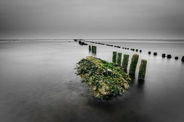 Zeewier groen 5 von Albert Wester Terschelling Photography
