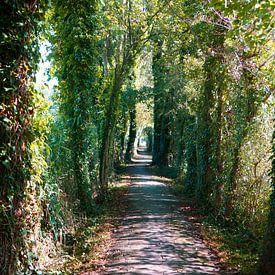De Tunnel naar het Licht.... van Wieland Teixeira