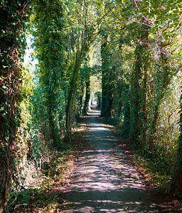 Der Tunnel zum Licht.... von Wieland Teixeira