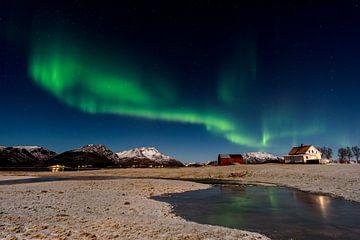 Aurora Borealis op Langøya, Noorwegen van Patricia Dhont