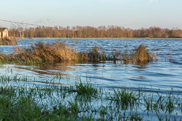 Hoog water bij de IJssel, Welsum  van Evelien Stijf