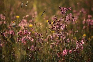 Blumenmeer (1 von 2) von Jeroen Gutte