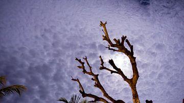 Cloudy night von Annemiek Stuut
