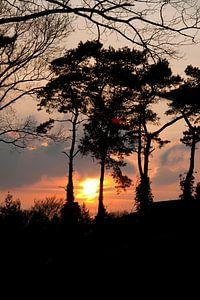 Bomen bij zonsondergang van