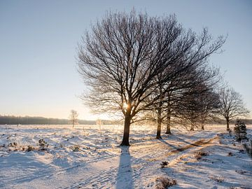 Sonnenaufgang in einer weißen Welt von Henri van Rheenen