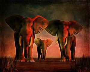 Dierenrijk – Drie olifanten kijken je recht in de ogen