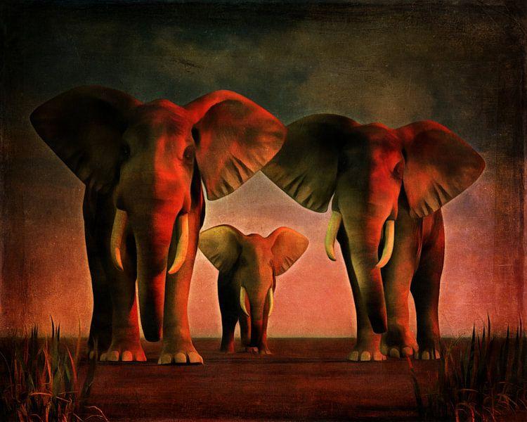 Dierenrijk – Drie olifanten kijken je recht in de ogen van Jan Keteleer