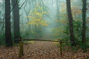Hek met pad in mistig herfstbos van Peter Bolman