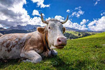 Glückliche Kuh von Tilo Grellmann | Photography