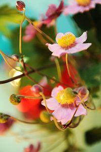 Japanse anemoon, bloemen tussen de knoppen