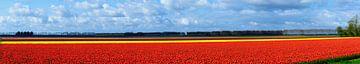Tulpenfeld von Peter Laarakker
