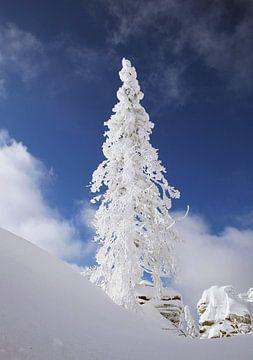 Wintertraum im Böhmerwald ! Tief verschneite Landschaft, Schnee, Winter, Sonne.      von Rudolf Brandstätter