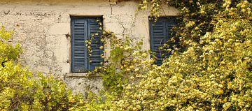 Die rustikale alte Mauer mit blauen Rollläden von Shot it fotografie